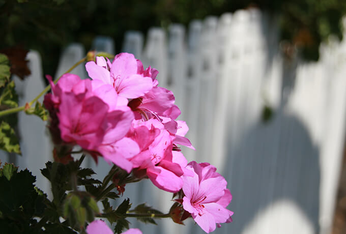 img-pink-flower